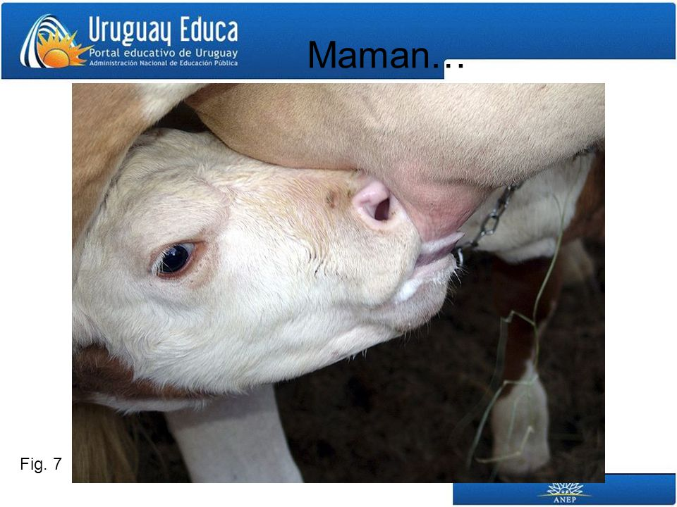 Fig. 7 Maman…