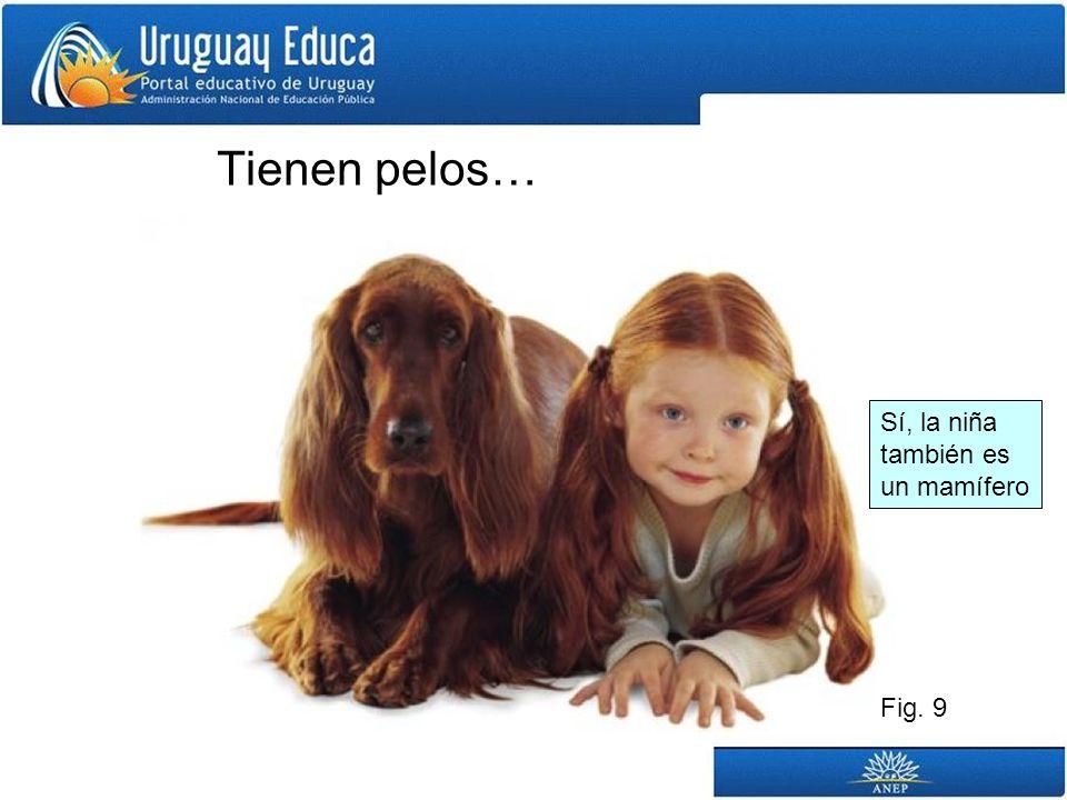 Tienen pelos… Fig. 9 Sí, la niña también es un mamífero