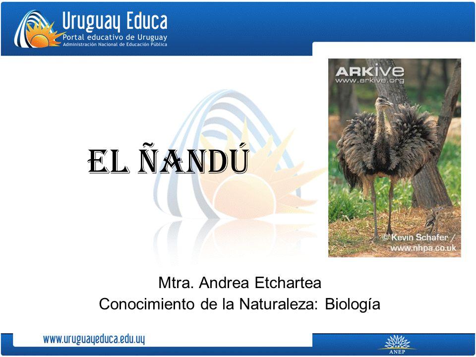 EL ÑANDÚ Mtra. Andrea Etchartea Conocimiento de la Naturaleza: Biología