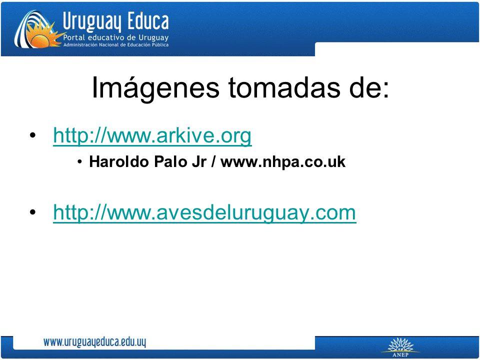 Imágenes tomadas de: http://www.arkive.org Haroldo Palo Jr / www.nhpa.co.uk http://www.avesdeluruguay.com