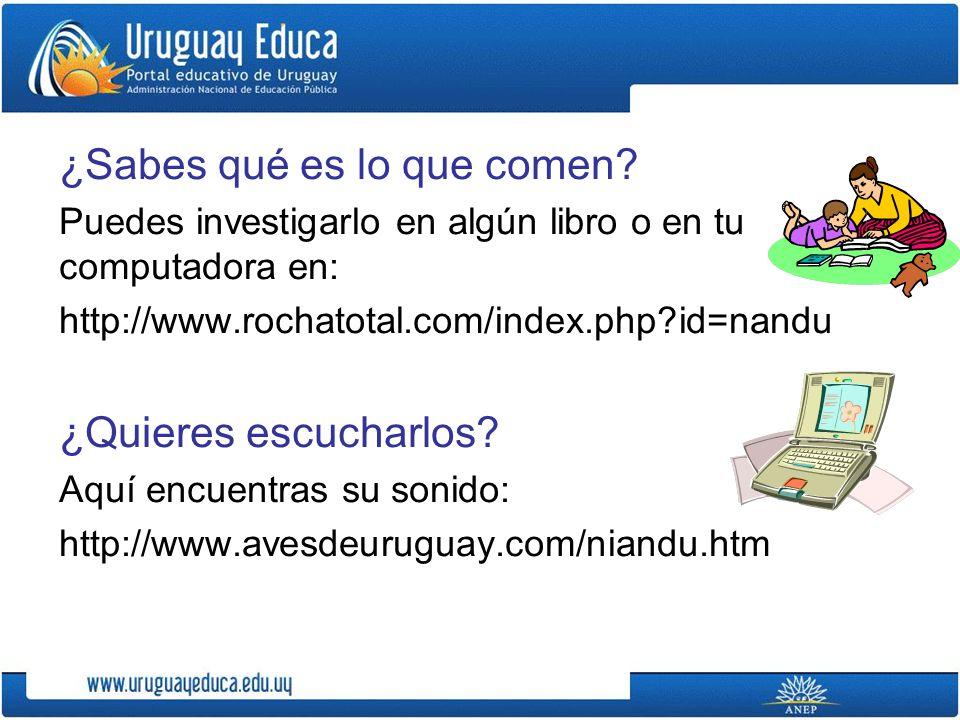 FUENTES CONSULTADAS: http://www.avesdeuruguay.com/niandu.htm http://www.minifauna.com/2009/07/24/el-nandu/ http://www.damisela.com/zoo/ave/ratities/nandu/a mericana/index.htm http://es.wikipedia.org/wiki/Rhea_americana http://www.patrimonionatural.com/HTML/especies /aves/niandu/descripcion.asp