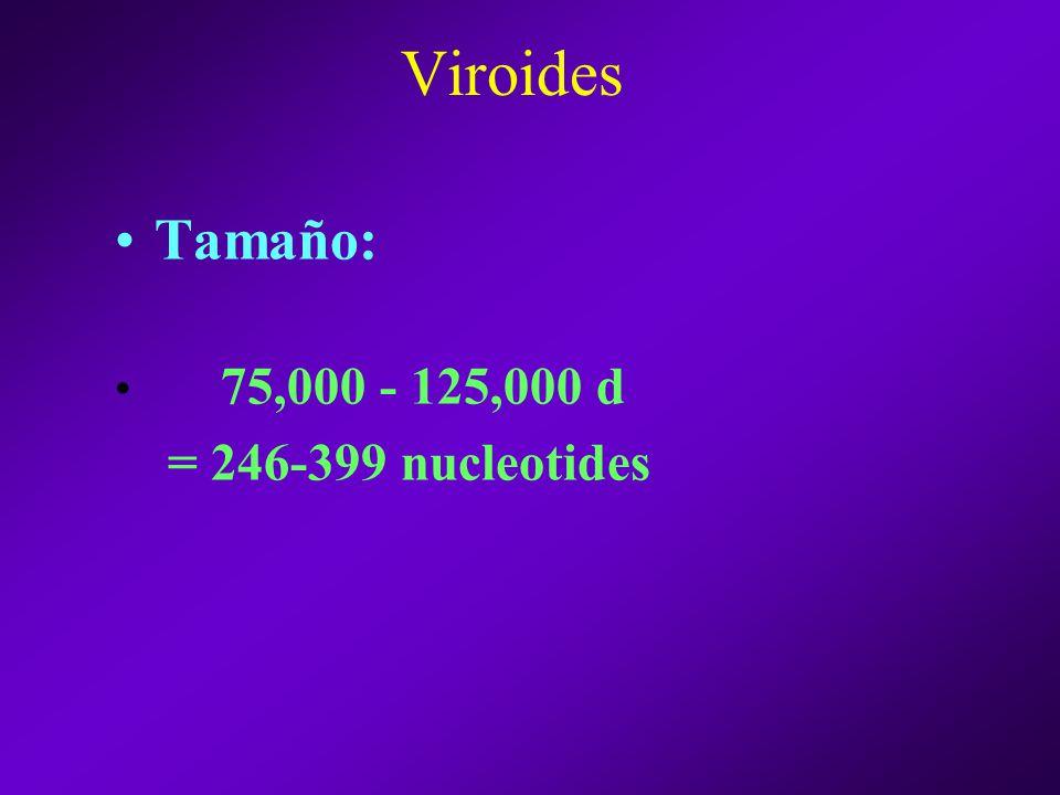 Viroides Tamaño: 75,000 - 125,000 d = 246-399 nucleotides