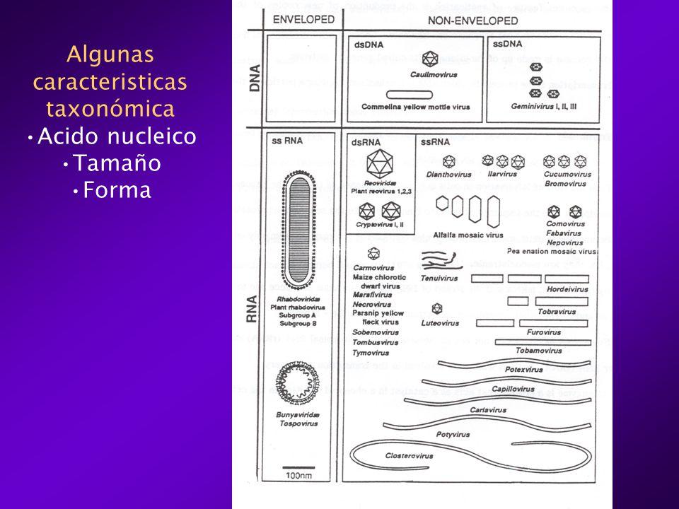 Algunas caracteristicas taxonómica Acido nucleico Tamaño Forma