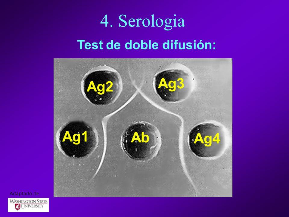 4. Serologia Test de doble difusión: Ab Ag1 Ag2 Ag3 Ag4 Adaptado de