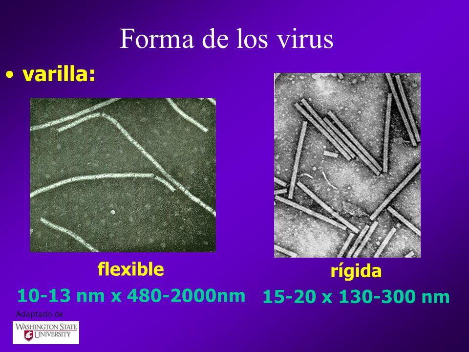 varilla: flexible 10-13 nm x 480-2000nm rígida 15-20 x 130-300 nm Forma de los virus Adaptado de