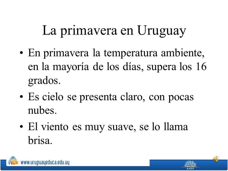 La primavera en Uruguay En primavera la temperatura ambiente, en la mayoría de los días, supera los 16 grados. Es cielo se presenta claro, con pocas n