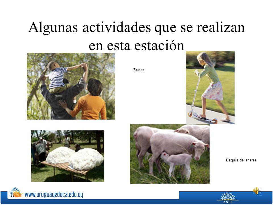 Algunas actividades que se realizan en esta estación Esquila de lanares Paseos