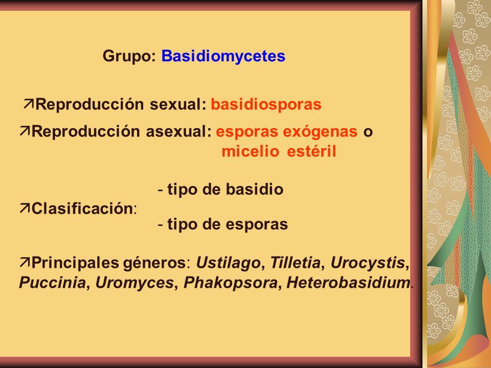 Grupo: Basidiomycetes ä Reproducción sexual: basidiosporas ä Reproducción asexual: esporas exógenas o micelio estéril ä Clasificación: - tipo de basid
