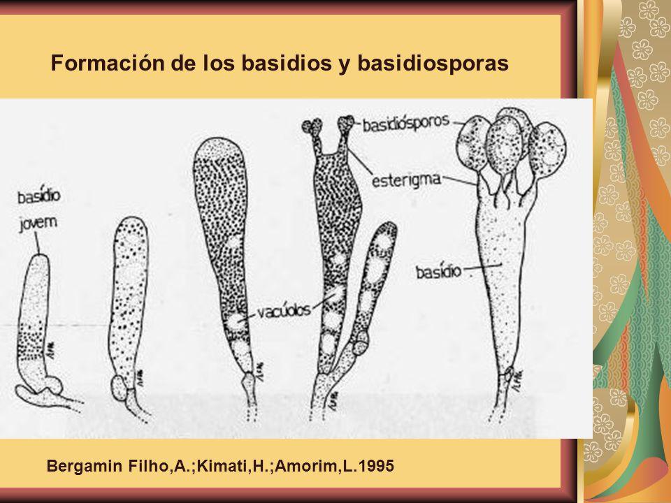 Formación de los basidios y basidiosporas Bergamin Filho,A.;Kimati,H.;Amorim,L.1995