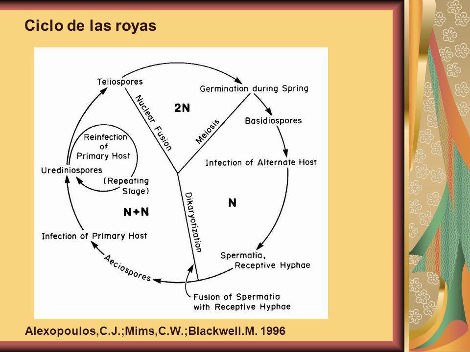 Ciclo de las royas Alexopoulos,C.J.;Mims,C.W.;Blackwell.M. 1996