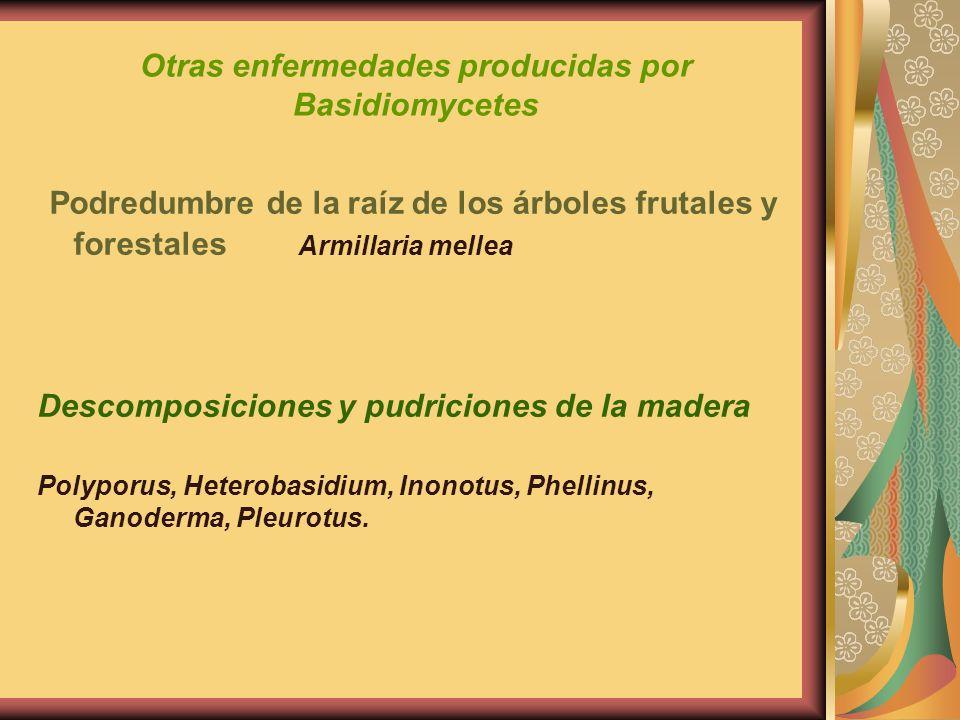 Otras enfermedades producidas por Basidiomycetes Podredumbre de la raíz de los árboles frutales y forestales Armillaria mellea Descomposiciones y pudr
