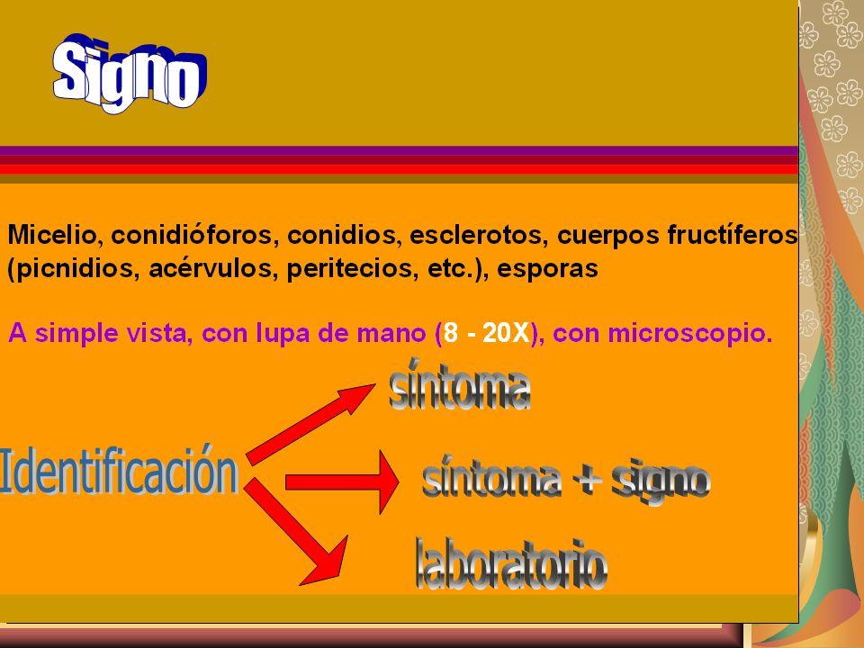 1.Observación de síntomas y signo 2. Identificación del hongo 3.