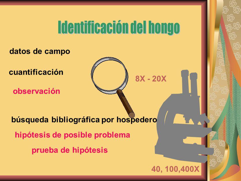 8X - 20X datos de campo cuantificación observación búsqueda bibliográfica por hospedero 40, 100,400X hipótesis de posible problema prueba de hipótesis