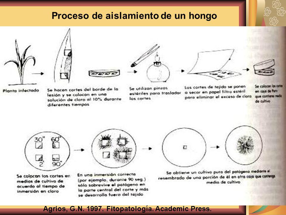 Agrios, G.N. 1997. Fitopatología. Academic Press. Proceso de aislamiento de un hongo