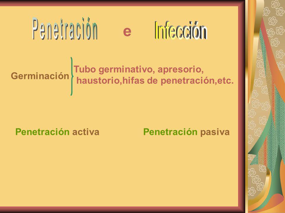 Tubo germinativo, apresorio, haustorio,hifas de penetración,etc. Germinación Penetración activaPenetración pasiva e