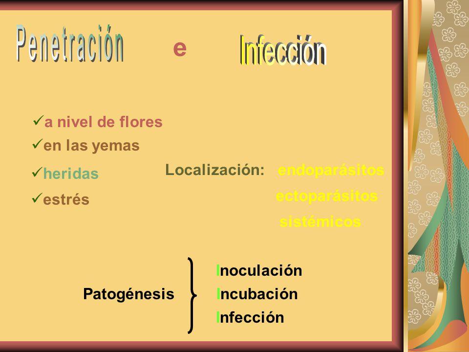 a nivel de flores en las yemas heridas e estrés Localización:: endoparásitos ectoparásitos Incubación Inoculación Infección Patogénesis / sistémicos /
