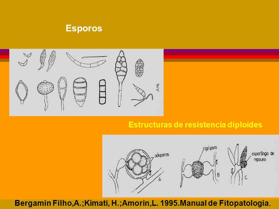 Estructuras de resistencia diploides Esporos Bergamin Filho,A.;Kimati, H.;Amorin,L.