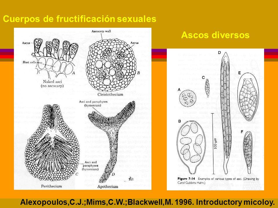 Cuerpos de fructificación sexuales Ascos diversos Alexopoulos,C.J.;Mims,C.W.;Blackwell,M.