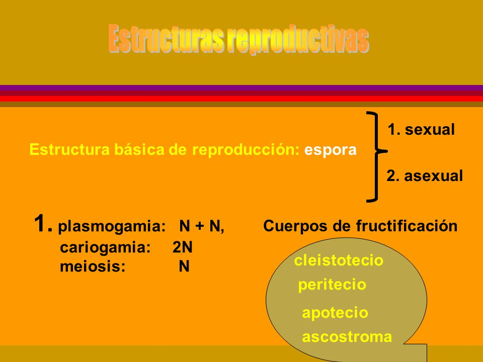Mecanismos de variabilidad en los hongos Variabilidad de los caracteres patogénicos : virulencia reacción a diferentes cultivares rango de hospedantes Procesos involucrados mutación reproducción sexual reproducción parasexual Mutación Cambio abrupto en el material genético de una célula que es transmitido hereditariamente a la progenie.
