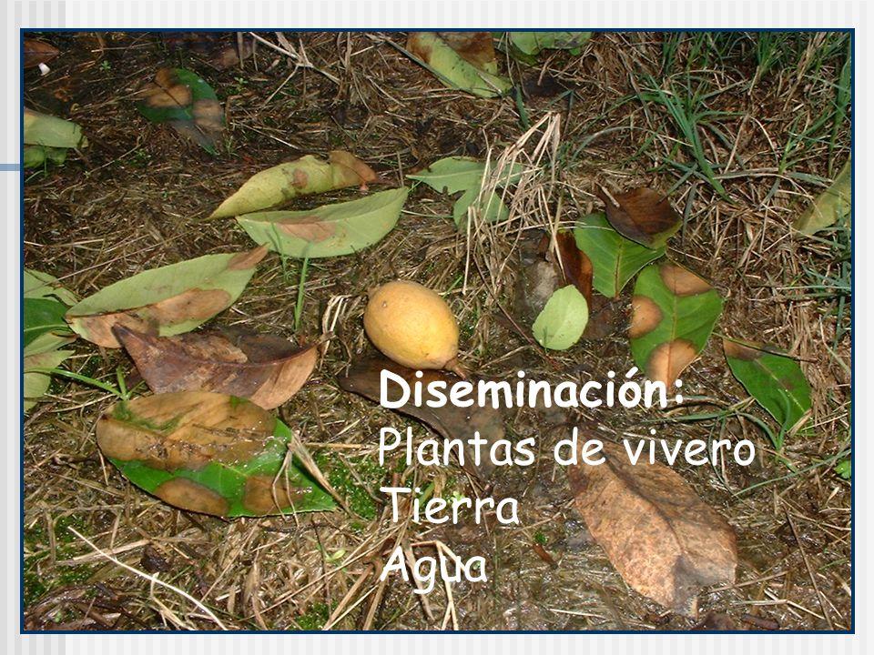 Sobrevivencia: en el suelo como oospora o clamidospora, en tejido infectado como micelio o esporangios.