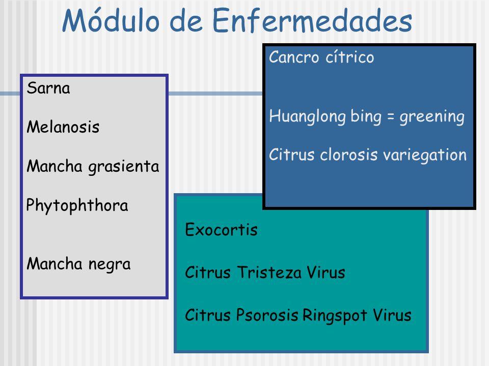 BIBLIOGRAFÍA RECOMENDADA DURÁN-VILA, N. ; MORENO, P. 2000. Enfermedades de los cítricos. Monografías de la Sociedad Española de Fitopatología Nº2. 165