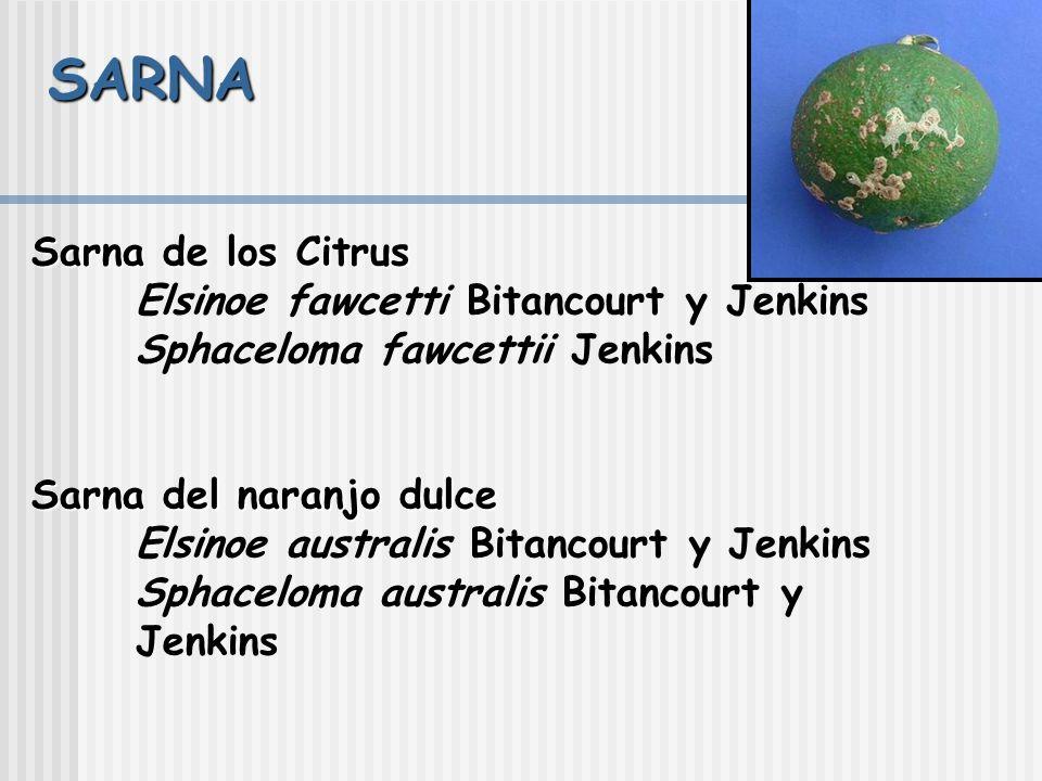 Módulo de Enfermedades Exocortis Citrus Tristeza Virus Citrus Psorosis Ringspot Virus Cancro cítrico Huanglong bing = greening Citrus clorosis variega