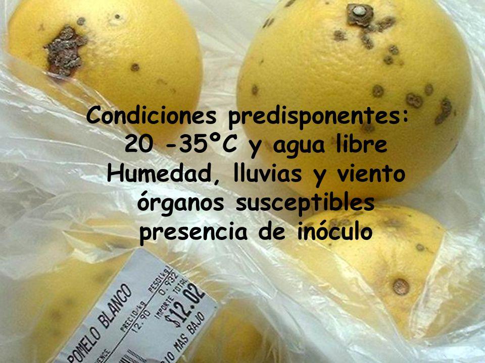 Susceptibilidad: heridas estomas edad de tejidos vigor. alta: pomelo y trifolia media: limón, naranjo amargo y n. dulce moderadamente resistente: mand