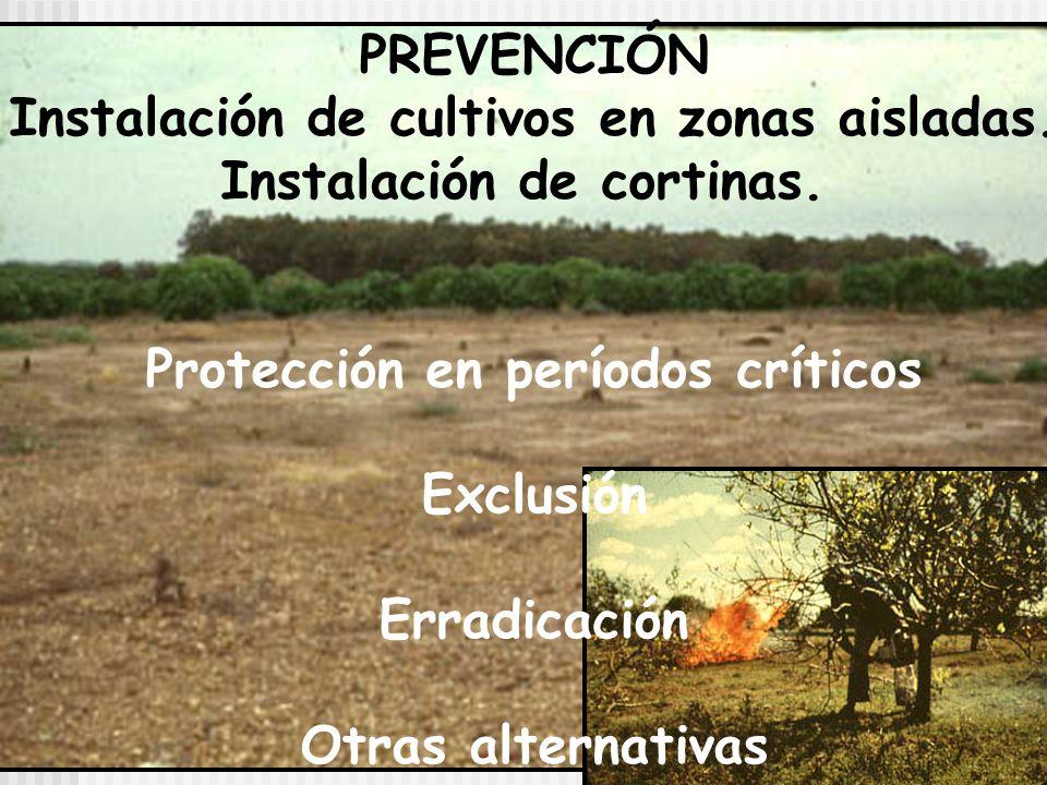 Diseminación: por acción del hombre: material vegetal infectado, herramientas, ropas.