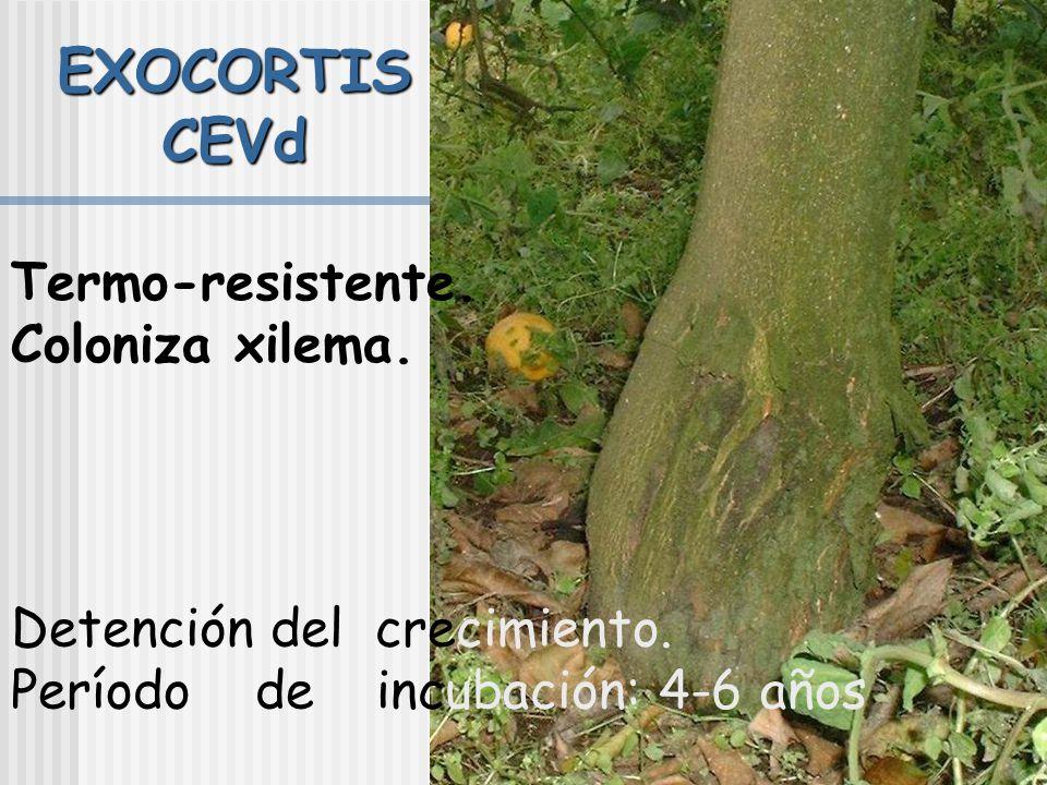 Control Certificación. Erradicación. Pies tolerantes (P.trifoliata o sus híbridos). Protección cruzada (cuando hay aislados virulentos y vector, no es