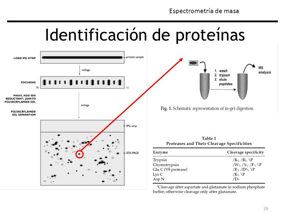 26 Identificación de proteínas Espectrometría de masa