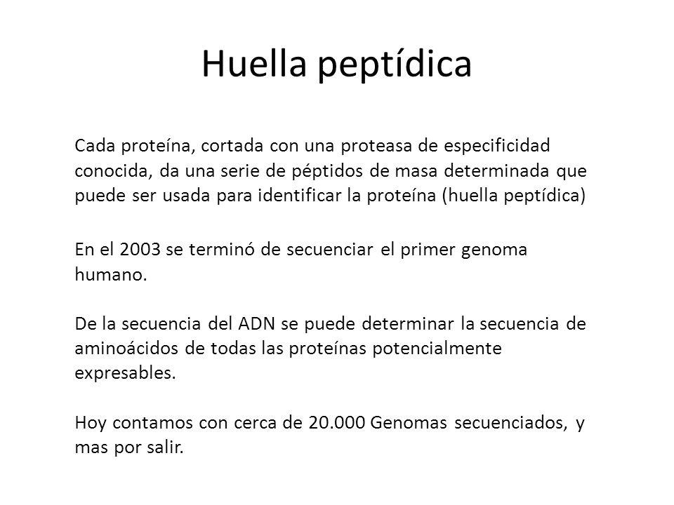 Huella peptídica Cada proteína, cortada con una proteasa de especificidad conocida, da una serie de péptidos de masa determinada que puede ser usada p