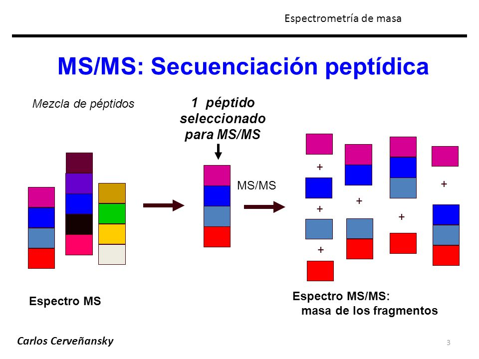 3 MS/MS: Secuenciación peptídica Espectro MS/MS: masa de los fragmentos Mezcla de péptidos MS/MS + + + + + + 1 péptido seleccionado para MS/MS Espectr