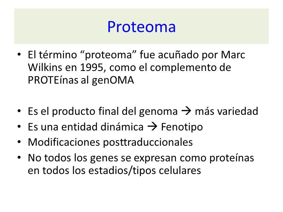 Proteoma El término proteoma fue acuñado por Marc Wilkins en 1995, como el complemento de PROTEínas al genOMA Es el producto final del genoma más vari