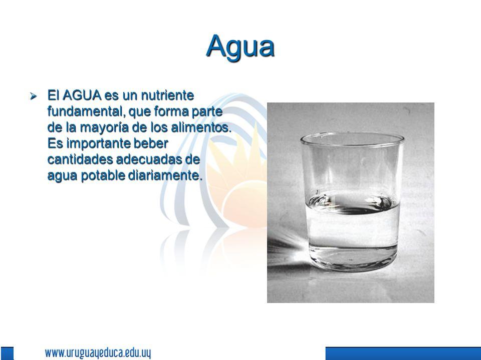 Agua El AGUA es un nutriente fundamental, que forma parte de la mayoría de los alimentos.