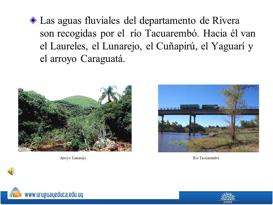 Las aguas fluviales del departamento de Rivera son recogidas por el río Tacuarembó. Hacia él van el Laureles, el Lunarejo, el Cuñapirú, el Yaguarí y e