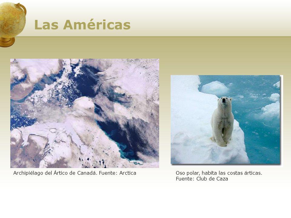 Archipiélago del Ártico de Canadá. Fuente: ArcticaOso polar, habita las costas árticas. Fuente: Club de Caza Las Américas