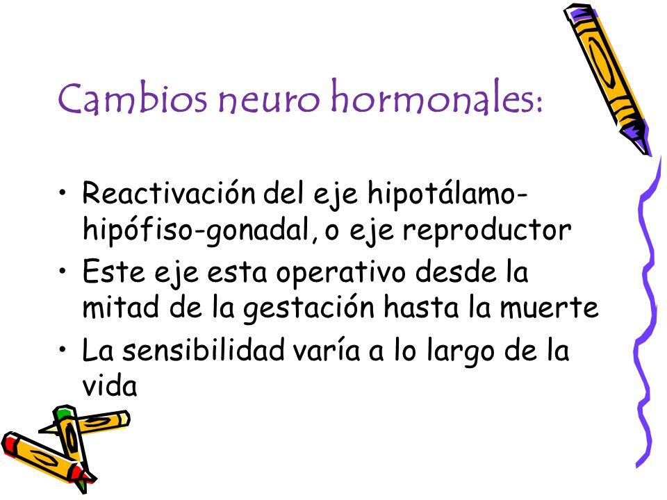 Cambios neuro hormonales: Reactivación del eje hipotálamo- hipófiso-gonadal, o eje reproductor Este eje esta operativo desde la mitad de la gestación hasta la muerte La sensibilidad varía a lo largo de la vida