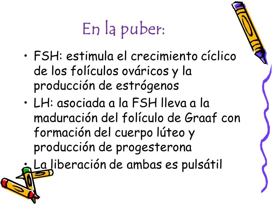 En la puber: FSH: estimula el crecimiento cíclico de los folículos ováricos y la producción de estrógenos LH: asociada a la FSH lleva a la maduración del folículo de Graaf con formación del cuerpo lúteo y producción de progesterona La liberación de ambas es pulsátil