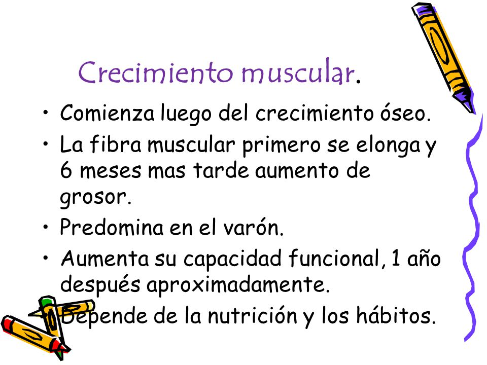 Crecimiento muscular. Comienza luego del crecimiento óseo. La fibra muscular primero se elonga y 6 meses mas tarde aumento de grosor. Predomina en el