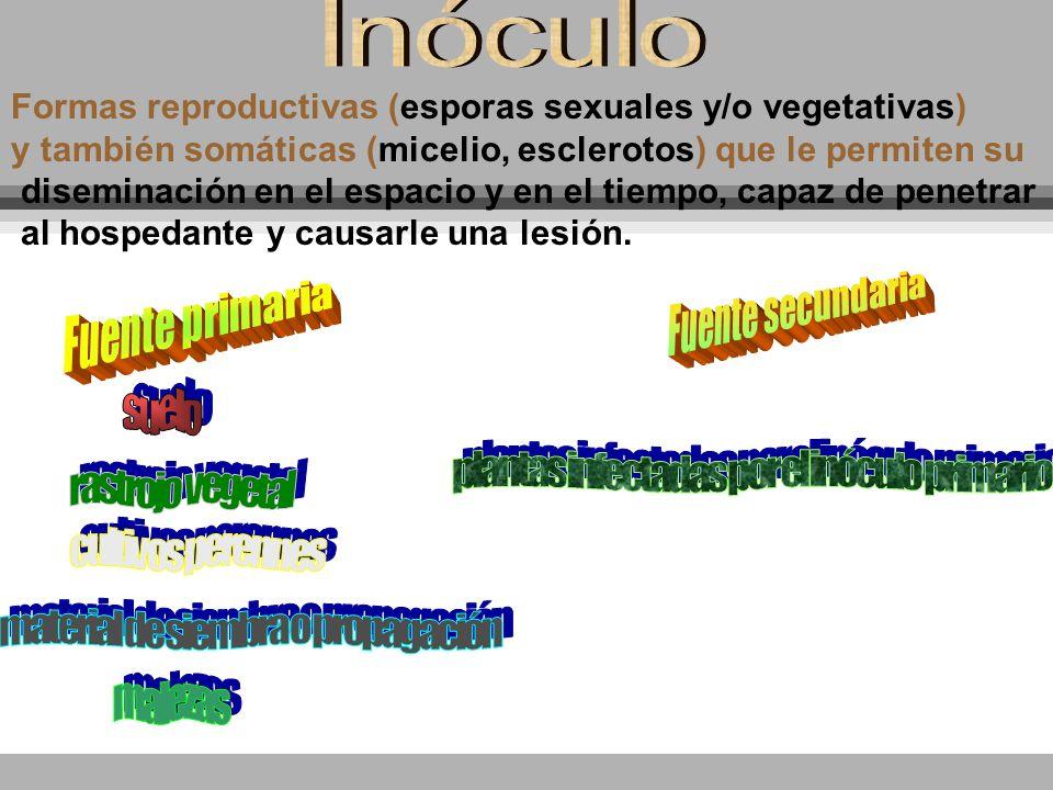 Formas reproductivas (esporas sexuales y/o vegetativas) y también somáticas (micelio, esclerotos) que le permiten su diseminación en el espacio y en e