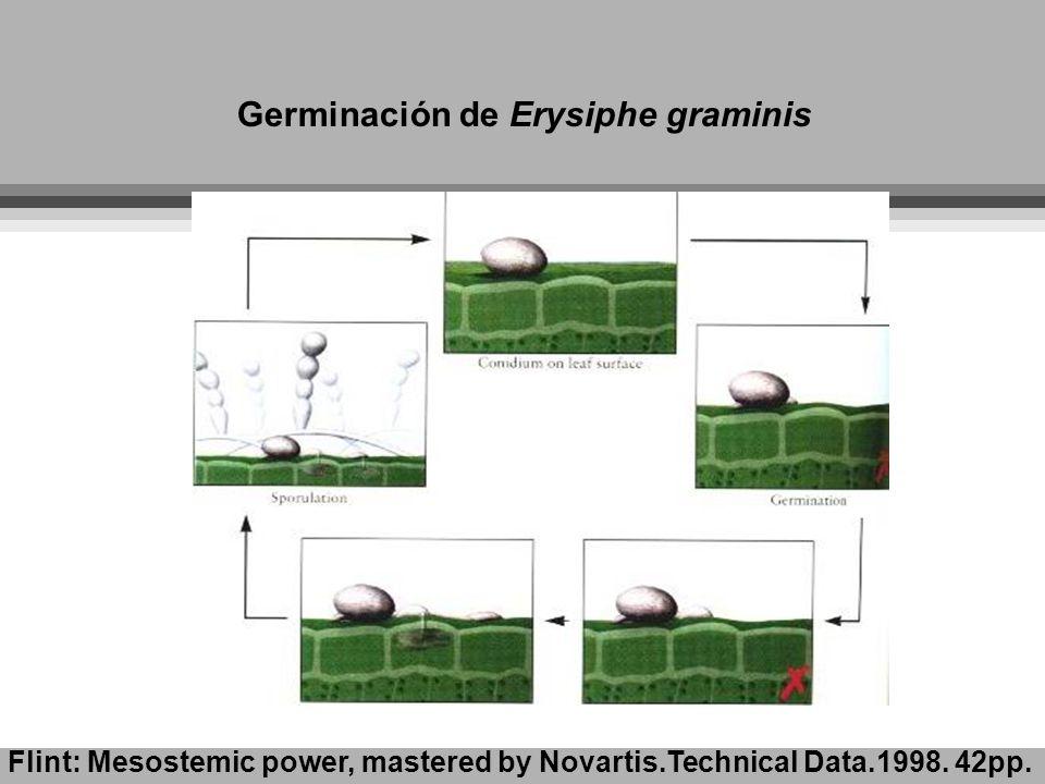 Germinación de Erysiphe graminis Flint: Mesostemic power, mastered by Novartis.Technical Data.1998. 42pp.
