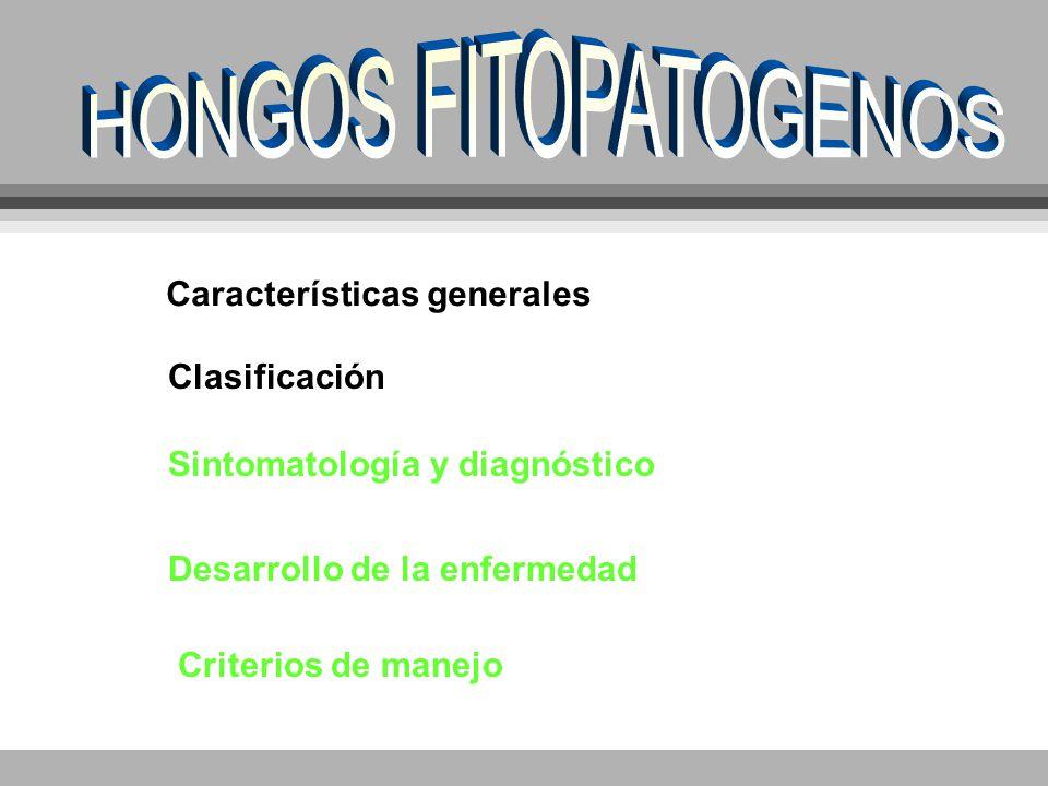 Características generales Clasificación Sintomatología y diagnóstico Desarrollo de la enfermedad Criterios de manejo
