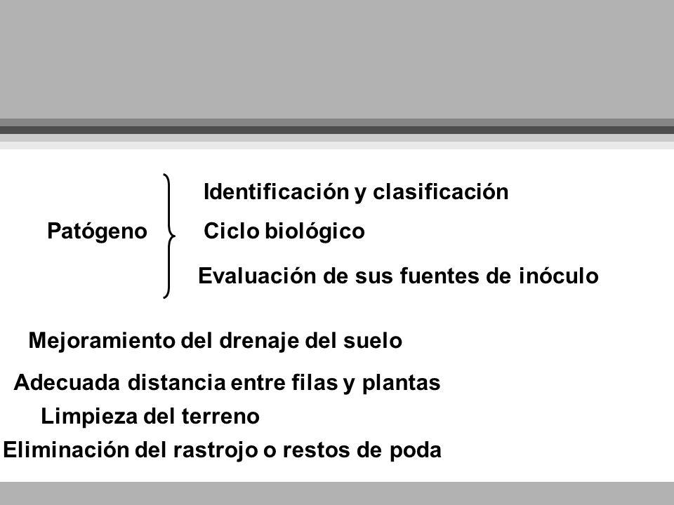 Patógeno Identificación y clasificación Ciclo biológico Evaluación de sus fuentes de inóculo Mejoramiento del drenaje del suelo Adecuada distancia ent