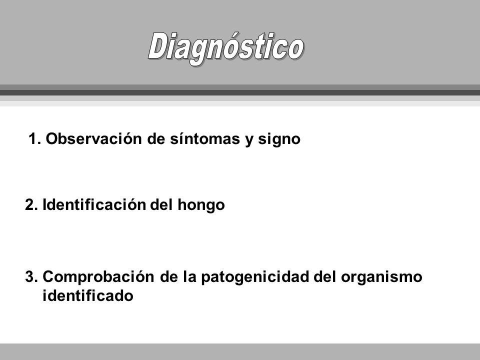 1. Observación de síntomas y signo 2. Identificación del hongo 3. Comprobación de la patogenicidad del organismo identificado