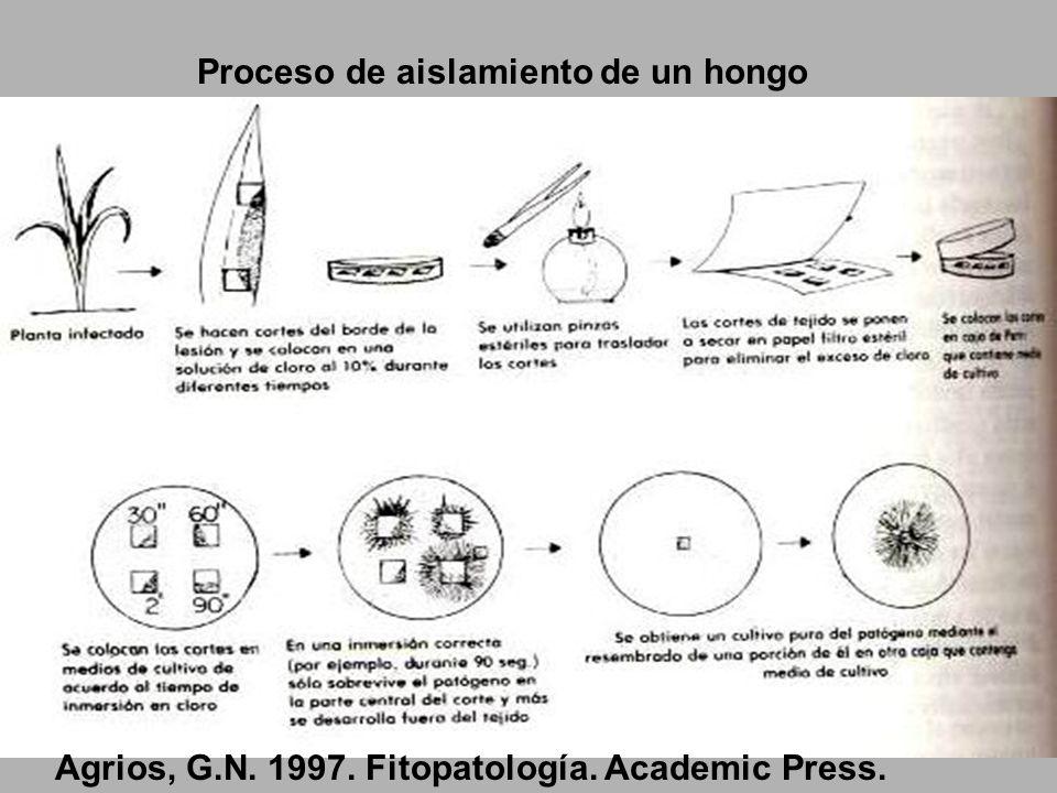 Stroby:el fungicida naturalmente eficiente.1999.BASF. 14pp Desarrollo de la enfermedad