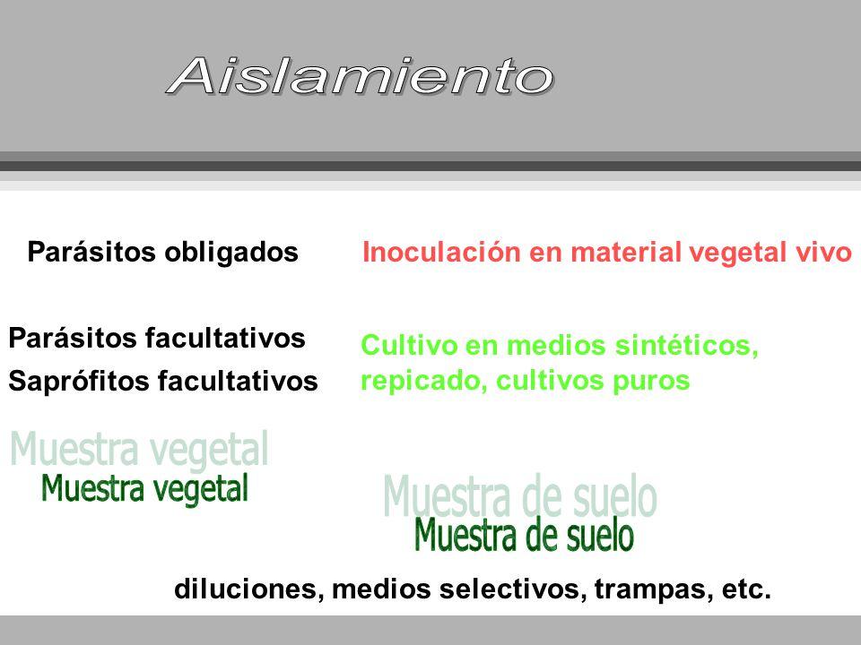 Parásitos obligados Parásitos facultativos Saprófitos facultativos Inoculación en material vegetal vivo Cultivo en medios sintéticos, repicado, cultiv
