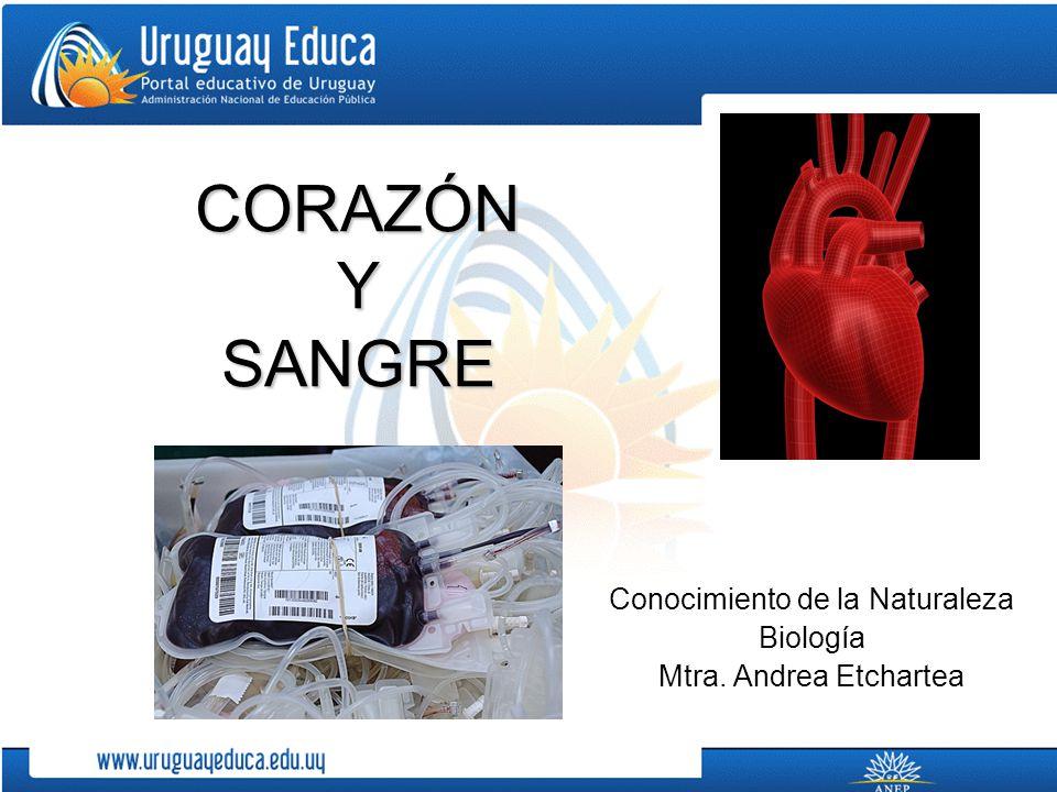 CORAZÓN Y SANGRE Conocimiento de la Naturaleza Biología Mtra. Andrea Etchartea