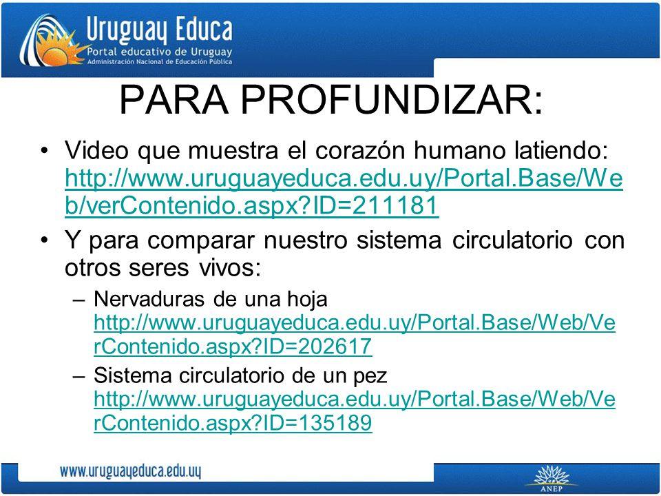 PARA PROFUNDIZAR: Video que muestra el corazón humano latiendo: http://www.uruguayeduca.edu.uy/Portal.Base/We b/verContenido.aspx?ID=211181 http://www