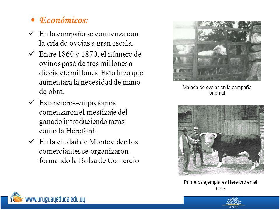 Económicos: En la campaña se comienza con la cría de ovejas a gran escala. Entre 1860 y 1870, el número de ovinos pasó de tres millones a diecisiete m