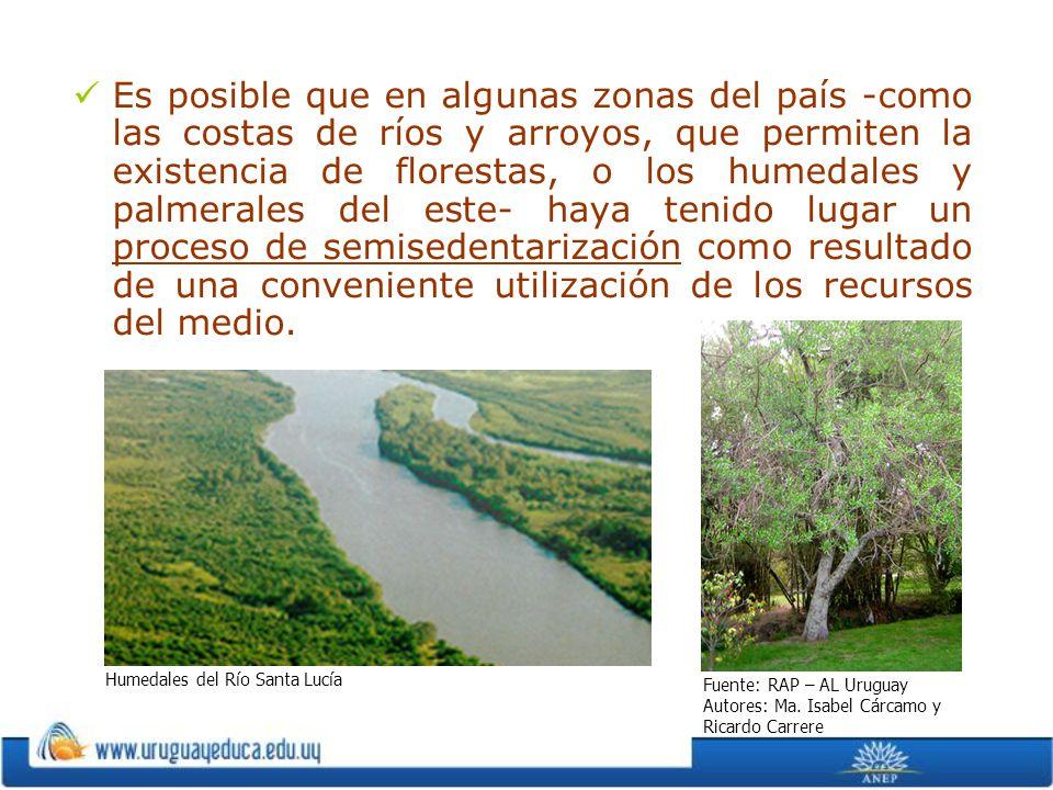 Es posible que en algunas zonas del país -como las costas de ríos y arroyos, que permiten la existencia de florestas, o los humedales y palmerales del